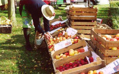 Obstmarkt Tiefengruben