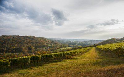 Weinwanderung in der Toskana des Ostens
