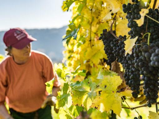 Thüringer Weingut<br>Bad Sulza