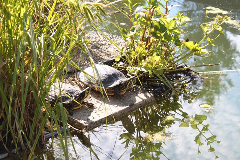 Camping Ettersburg Schildkröten