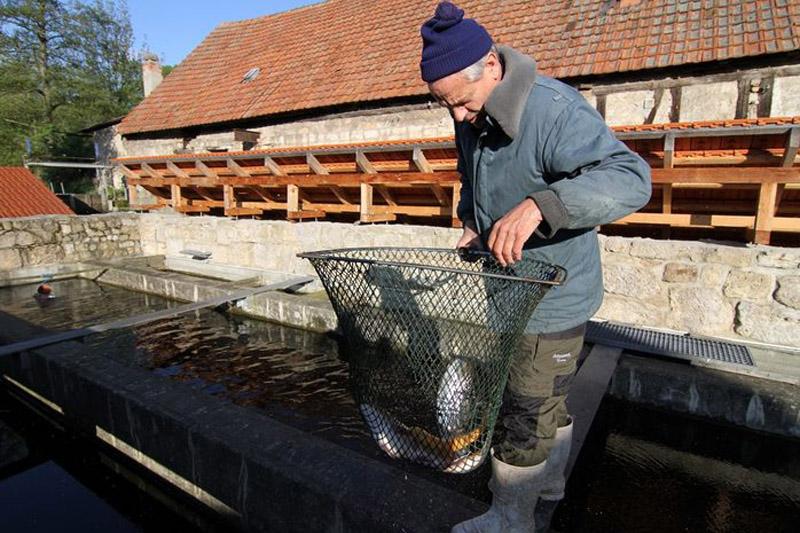 Fischerei Stedtener Mühle an der Ilm