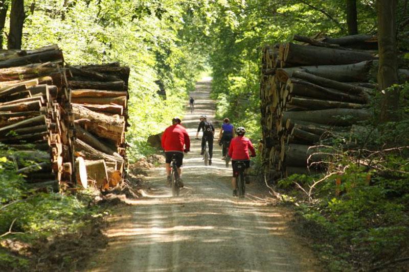 Schnurgerade in Richtung Westen führt die Prinzenschneise aus dem Ettersberger Forst.