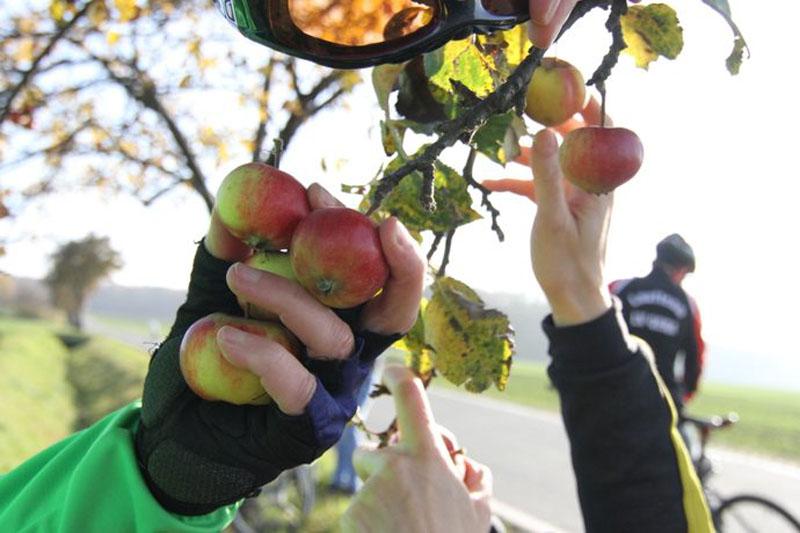 Apfelbaum auf dem Napoleon Apolda Radweg