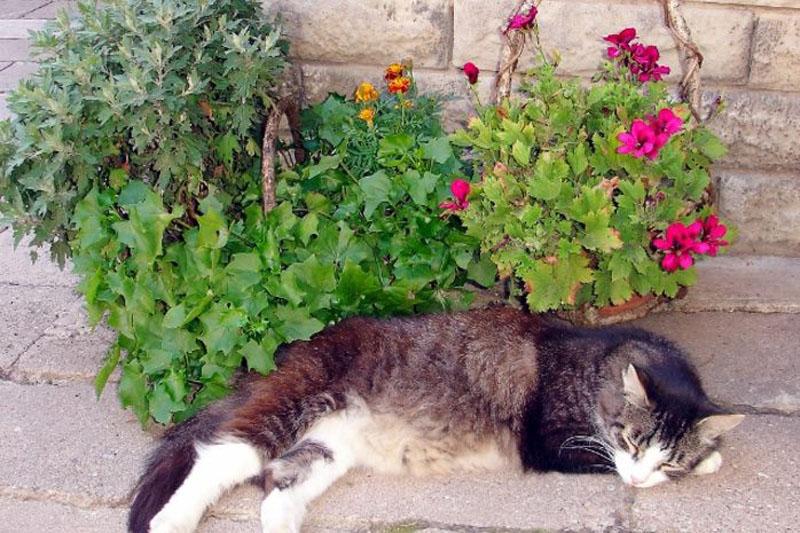 Pension vier napoleonslinden Garten mit Katze
