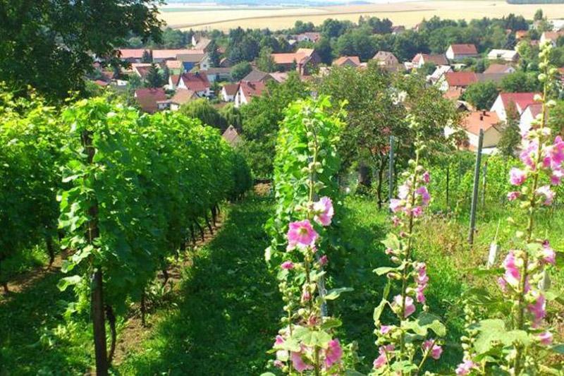 Weingarten Stephan Fuchs Hopfgarten