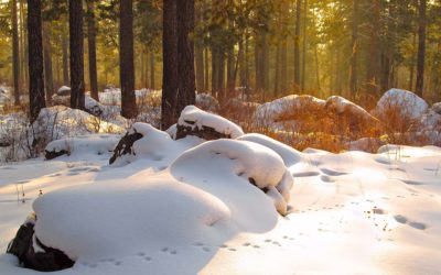 Fährten im Winterwald