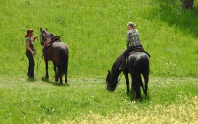 Der Traum vom Wanderreiten mit eigenem Pferd