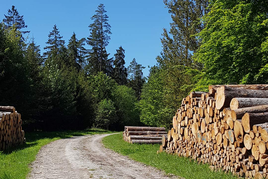 Baumholzstapel im Wald